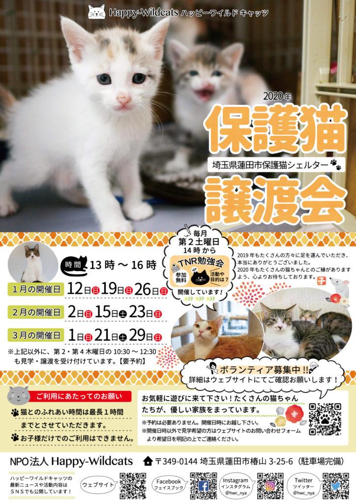 2020年1月〜3月の保護猫譲渡会のお知らせ