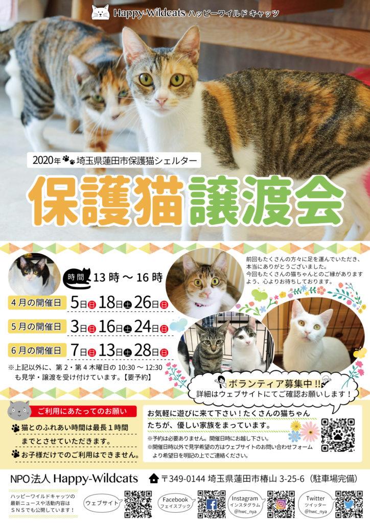 2020年4月〜6月の保護猫譲渡会のお知らせ