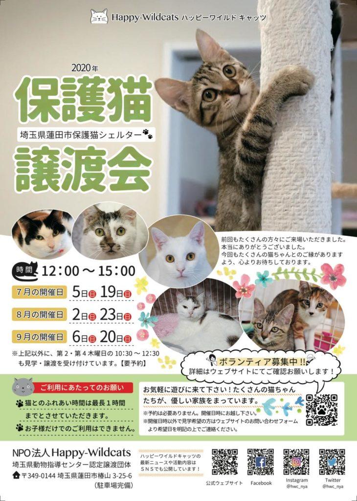 2020年7月〜9月の保護猫譲渡会のお知らせ
