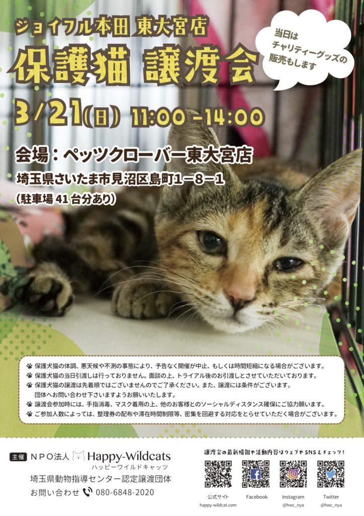 ジョイフル本田 東大宮店にて保護猫譲渡会