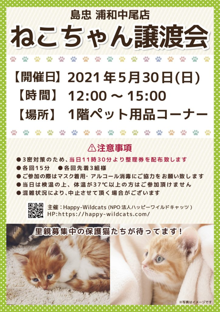 島忠 浦和中尾店にて保護猫譲渡会